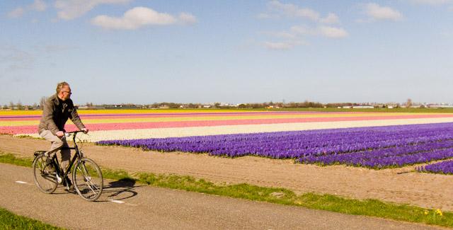 Cu bicicleta printre câmpurile de lalele din Olanda