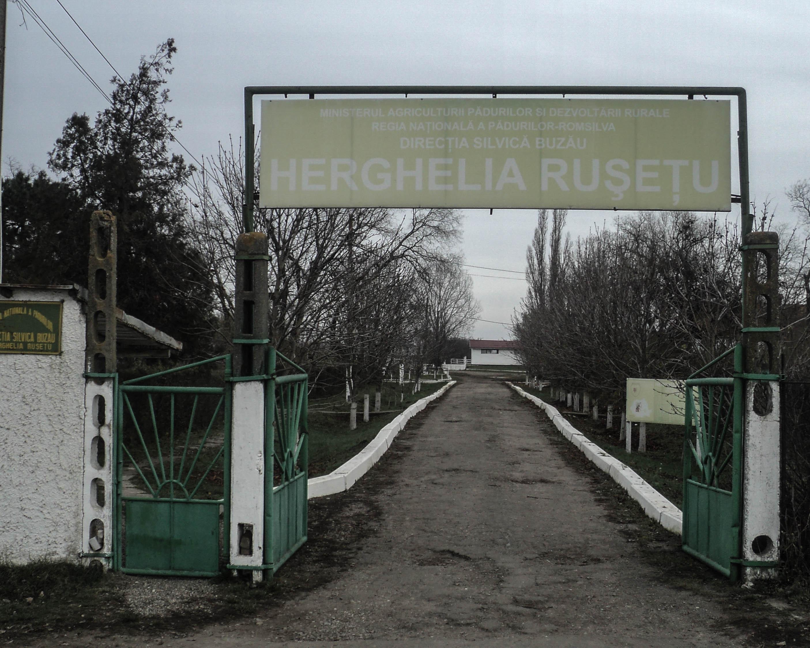 Herghelia Rușețu, o pagină nescrisă de istorie