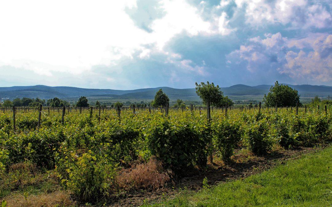 Top 5 destinații viticole aproape necunoscute