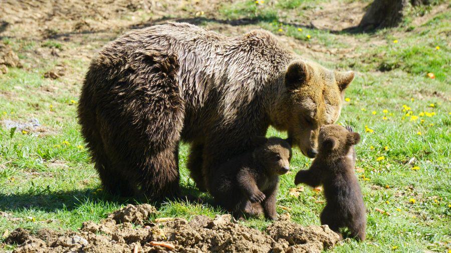 LIBEARTY Zărnești – Sanctuarul de Urși, o oază de speranță într-un deșert de suferință
