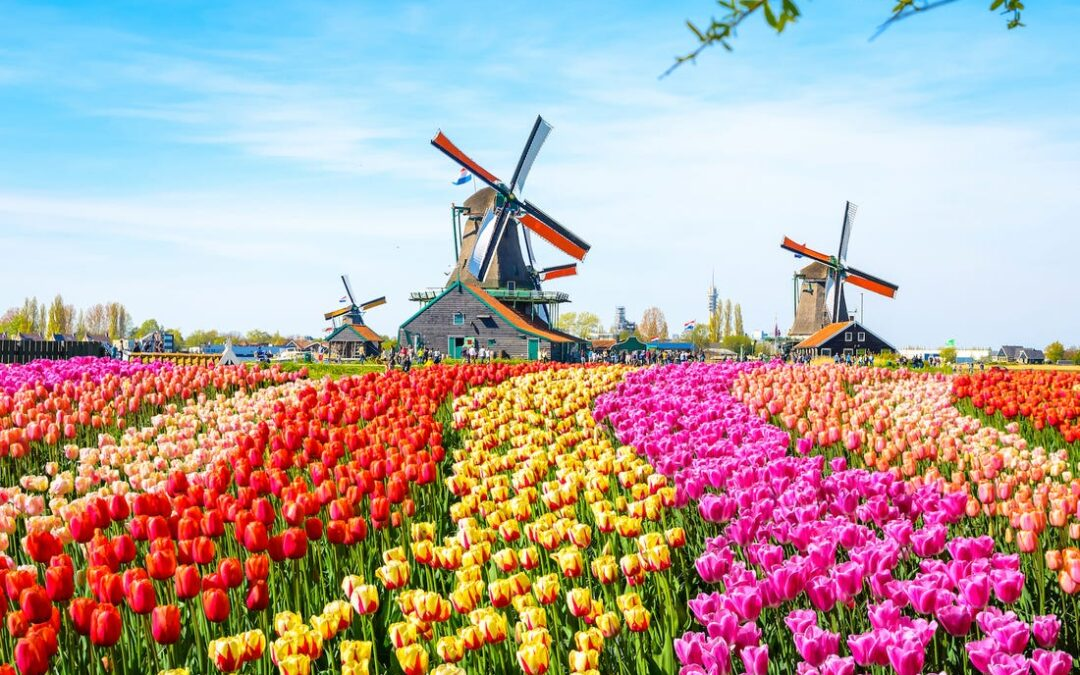 O fermă de lalele din Olanda a trimis un mesaj emoționat și inedit turiştilor care nu pot vizita ţara anul acesta