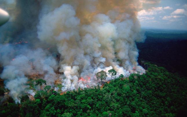 """Incendiile ilegale """"devorează"""" din nou Pădurea Amazoniană, în ciuda unei interdicții privind arderea terenurilor"""