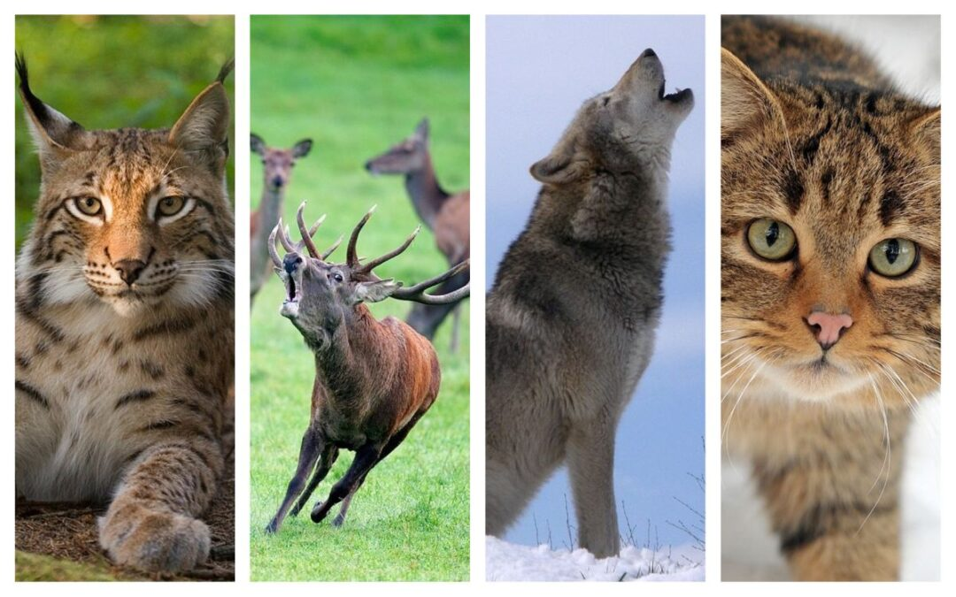Activitatea umană, o adevărată catastrofă pentru animalele sălbatice