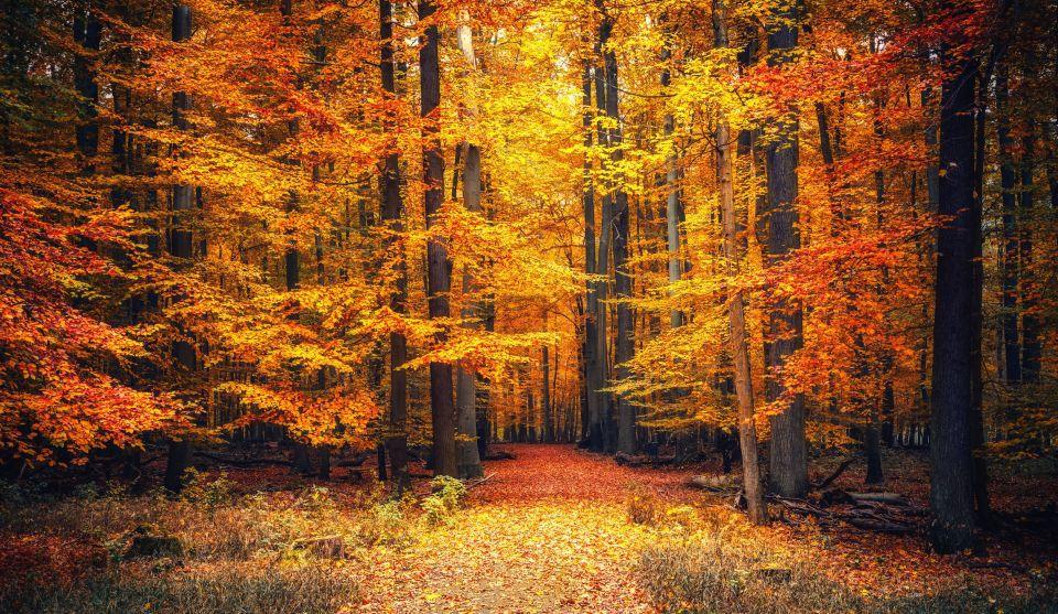 """Stiați că sintagmele """"Codrii de Aramă"""" și """"Pădurea de Argint"""" din poezia Călin (file din poveste) a lui Mihai Eminescu nu sunt inventate?"""