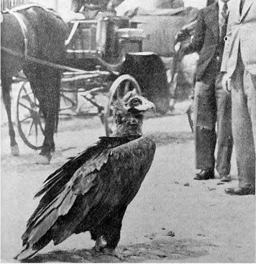 O poveste necunoscută multora – Vulturul Ilie, zăganul-legendă al Buzăului