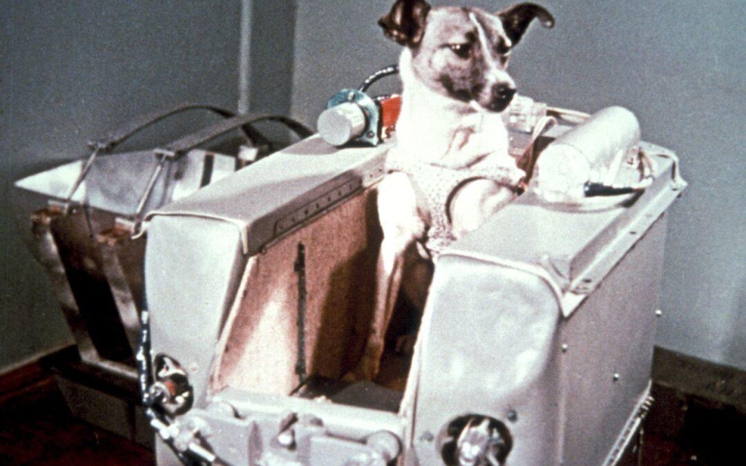 Povestea câinelui Laika, primul animal trimis în spaţiu