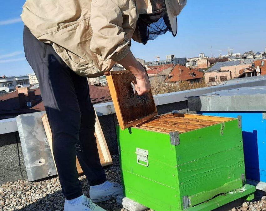 Povestea unui proiect inedit – prisaca urbană din Cișmigiu
