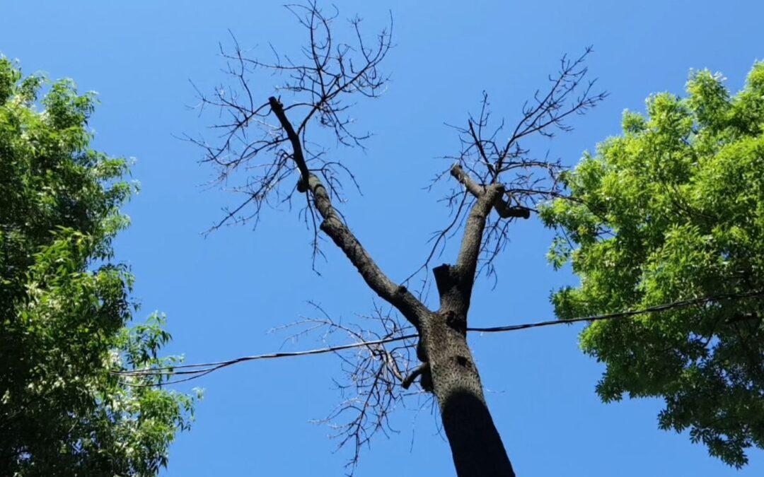 Nicuşor Dan a oprit avizele de toaletare a arborilor din Capitală: Până la iarnă se vor face doar unde vegetaţia este uscată