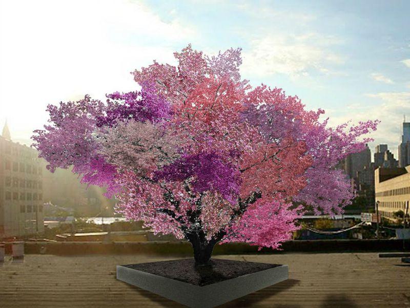 Cum arată copacii care fac 40 de tipuri de fructe?