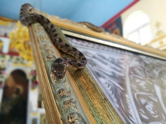 Panagia Lagouvarda – misterele mănăstirii invadate de șerpi an de an